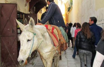 Entrando en la medina que visitar en Fez