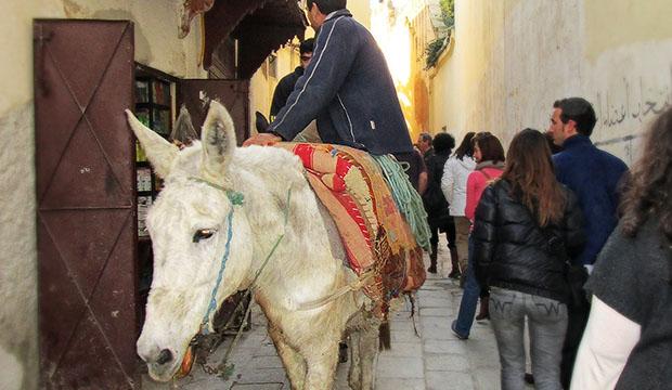 Información sobre Fes, Marruecos - Qué ver