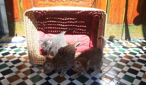 En Marruecos los gatos son sagrados. En general, para los árabes los perros no