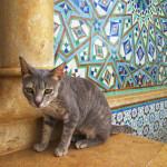 Gato en Casablanca, en la Mezquita de Hassan II
