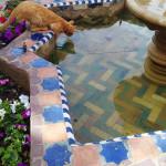Gato en Chaouen, bebiendo de una fuente. Autora: Samira Acdhi