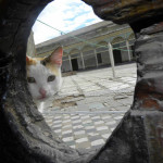 Gato en Marrakech, en el Palacio Bahia. Autora: Pili Serra Segarra