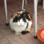 Gato en Meknès