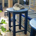 Gato en Rabat, en el Café Maure