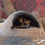 Gato en Rissani. Autor: Said de Tu Viaje a Marruecos