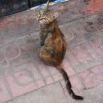 Gato en la medina de Marrakech