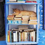 Gato en una estantería en Asilah