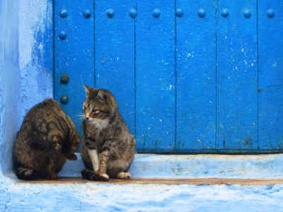 Gatos en Marruecos y perros en Marruecos