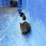 Gatos en fila en Chaouen. Autor: Óscar Domínguez Lunar