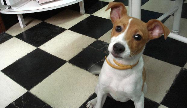 Los perros según el coran no son puros ni impuros, por lo que hay que acudir a lo que dice la Sunna