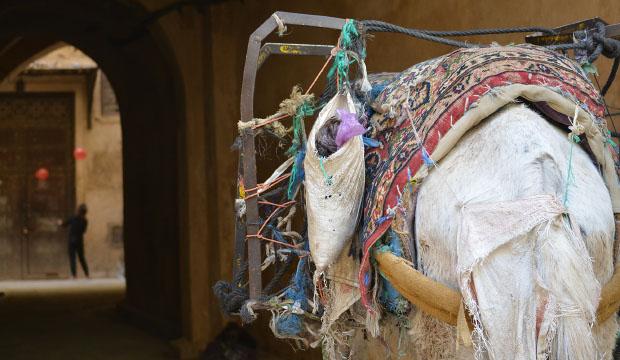 Los burros son el transporte por excelencia en la medina de Fes