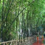 Jardines Majorelle. Bambúes