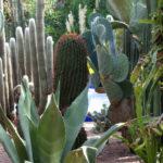 Jardines Majorelle. Cactus