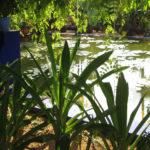 Jardines Majorelle. Estanque de nenúfares