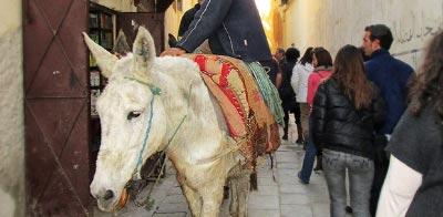 Información sobre Fez. Qué ver en Fez