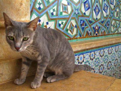 viajar con gatos a Marruecos