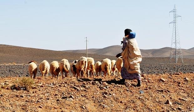 Dentro de las costumbres saharauis del pueblo tuareg está buscar pasto