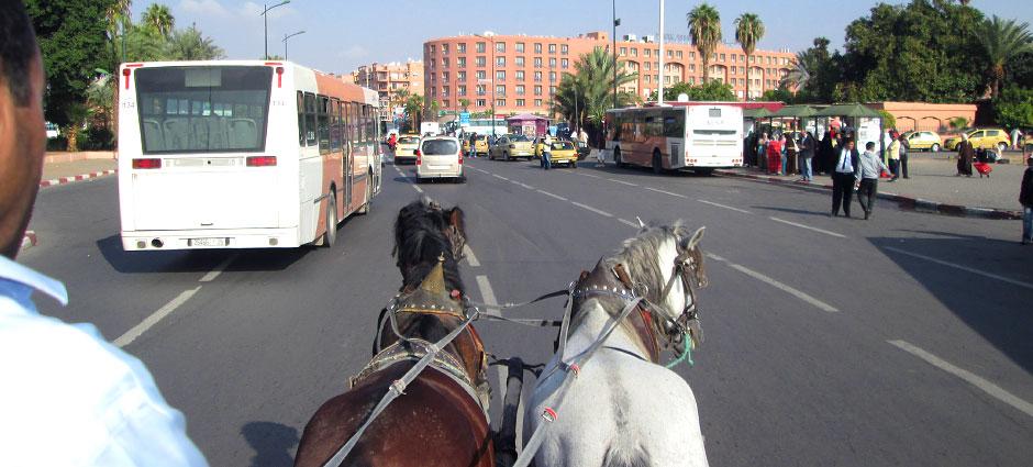 Paseo en calesa en Marrakech. Jardines de Marrakech
