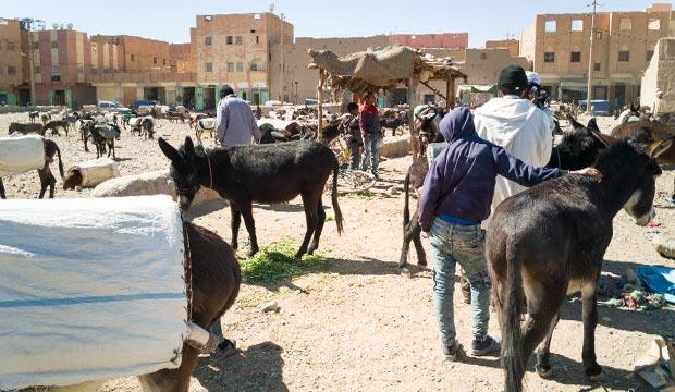 El aparcamiento de Burros de la ciudad de Rissani, no solo funciona como parking de burros, sino también como mercado de burros
