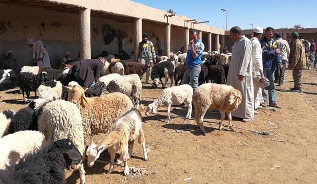 En el zoco de Rissani puedes observar cómo, en diferentes espacios, los comerciantes negocian con el ganado