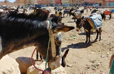 Rissani en Marruecos. Qué ver, mercado, zocos