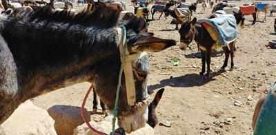Rissani en las cercanías del desierto del Sáhara occidental