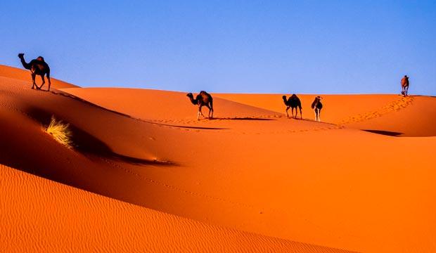 Camellos y Marruecos. Camellos y Marrakech