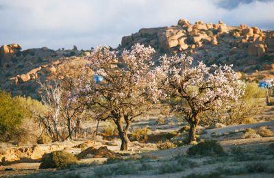 Ameln. Fiesta del Almendro en Flor
