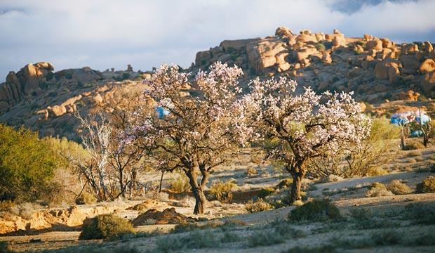 Marruecos en Junio. Almen y los almendros
