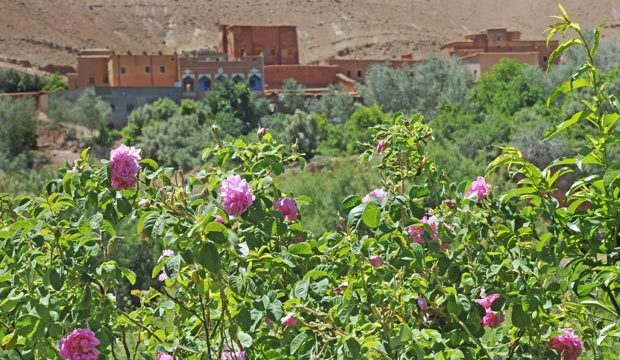 El festival de las rosas de Kelaa M'Gouna. La fiesta de las rosas en Marruecos