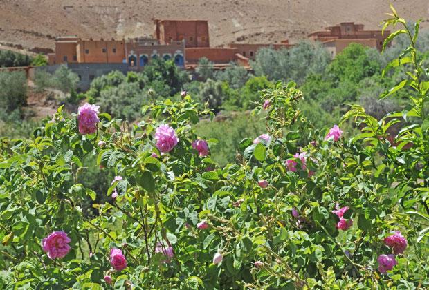El valle de las rosas hay que verlo en primavera