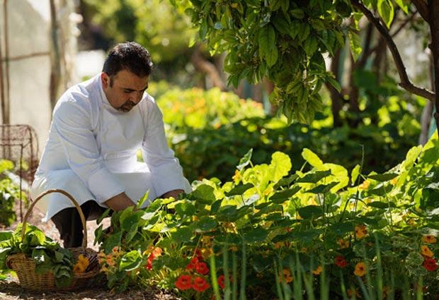 En the Mamounia la verdura se cultiva allí