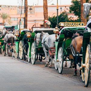 Paseo en calesa por Marrakech