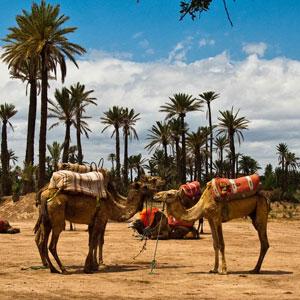 Paseo en camello en Marrakech