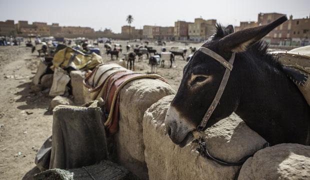 Rissani es un pueblo que ver en Marrakech, desierto del Sáhara (Merzouga) muy interesante por su mercado