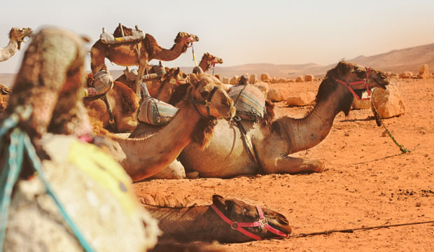 Dormir en el desierto de Agafay implica montar en dromedario