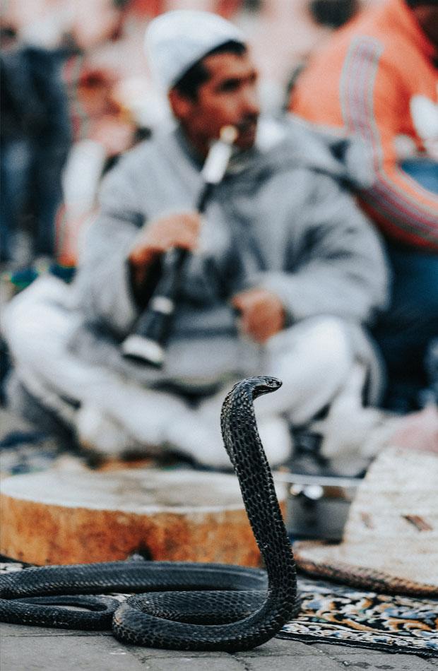 En plaza jamaa el fna ofrecen espectáculo encantadores de serpientes, entre otros
