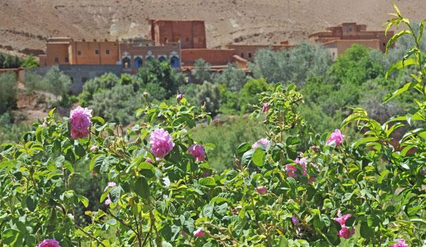 En las laderas del Alto Atlas se encuentra un valle de Marruecos en el que florecen las rosas