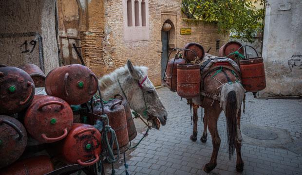 Unas de las cosas más curiosas que hacer en Fez es observar los animales de carga
