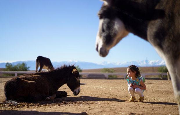 El refugio de Jarjeer está abierto a las personas interesadas en visitar el centro y conocer a los animales