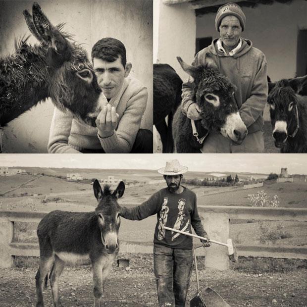 Financiada con fondos privados, la población equina del Jarjeer Mule and Donkey Refuge no para de crecer