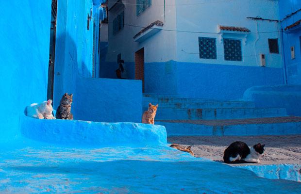 Una de las cosas que ver en Chaouen son sus fotogénicos gatos